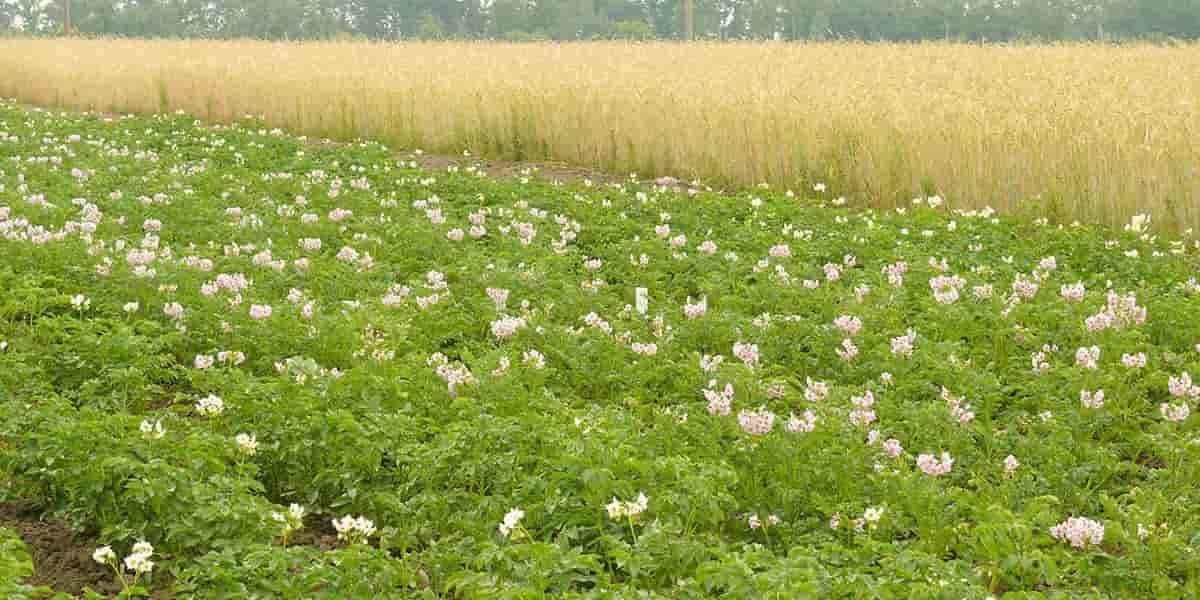 ВНИИМЗ:Улучшенные технологии возделывания сельхозкультур
