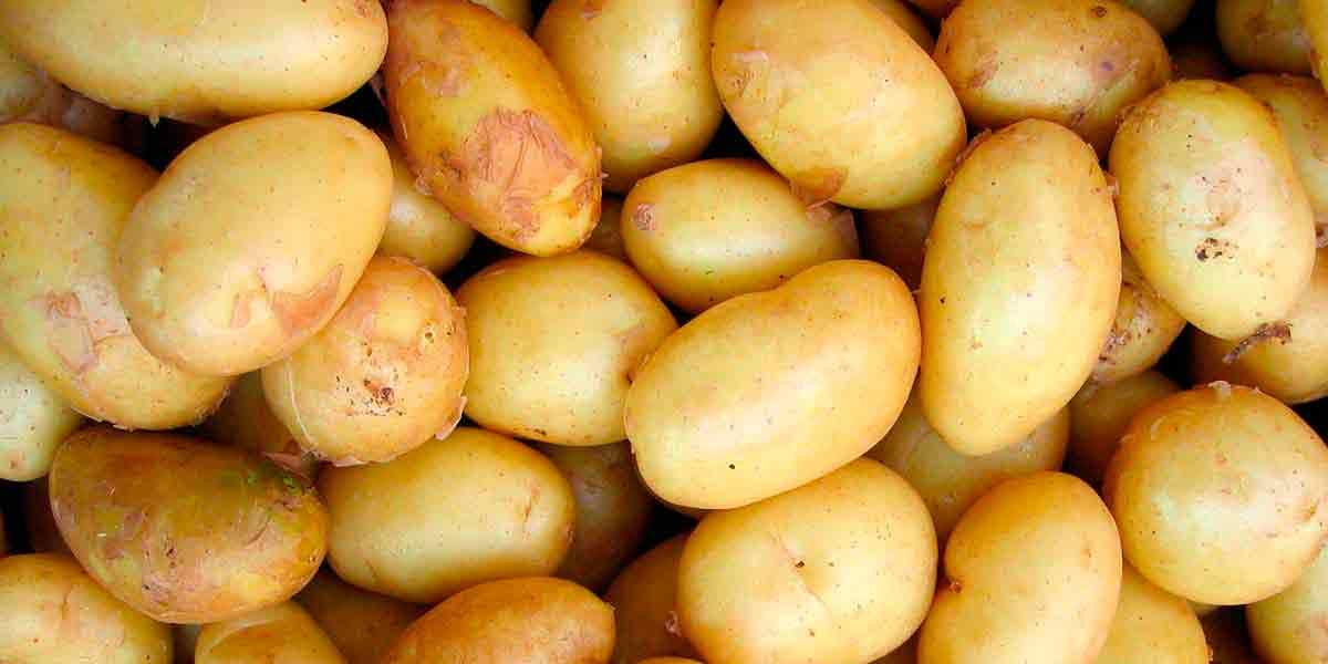 ВНИИМЗ: Сортовой продовольственный картофель